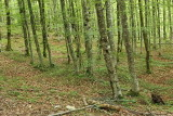 Beech forest bukov gozd_MG_4002-111.jpg