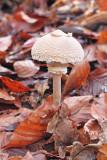 Mushroom gliva_MG_0039-11.jpg