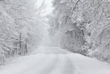 Snow sneg_MG_7826-111.jpg