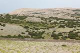 Pastures pašniki_MG_8717-111.jpg
