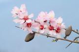 Prunus_MG_3340-111.jpg