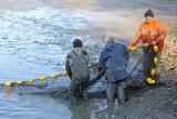 Fish harvesting izlov rib_MG_9319-111.jpg
