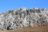 Winter zima_IMG_3388-111.jpg