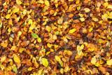 Leaves carpet listna preproga_MG_239-111.jpg