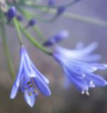 Flowers - Soft & Beautiful