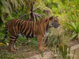 10-31 Safari Park