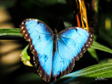 Butterfly Jungle 2015