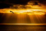 Golden rays, Hive Beach