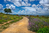 Footpath and flowers, Laguna de Fuente de Piedra