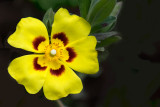Bright yellow flower (2157)