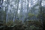 Forêt de Compiègne  25/09/2016