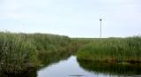 _NW31682 Phraf Great Marsh Osprey Mest Backround.jpg