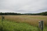 _NW31723 Meadowlark and Bobolink Breeding Area Tattersal Farm Haverhill.jpg