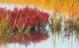 Fall Salt Marsh Plum Island.jpg.jpg
