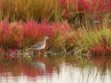 Fall Salt Marsh and Yellow Lehs Plum Islandjpg.jpg