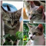 Our neighbor's kittens