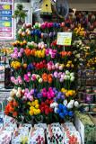 Tulip capital