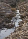 The wadi (3)