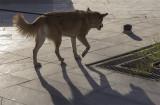 Sahraa the intrepid walker