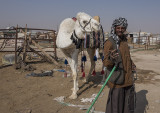 A man and his camel (1)