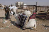 A man and his camel (2)