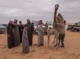 The baby camel story (7/8): Dispute