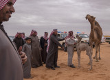 The baby camel story (8/8): Smiles