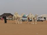Out for a walk, and a camel conversation