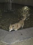 Sahraa the fountain dog