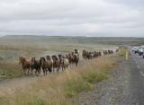 Great Icelandic horse adventure