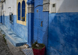 The Kasbah, two cats revisited