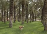 Enjoying the 'Palm Park'