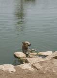 Sahraa learns to swim (1)