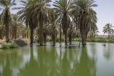 Different kind of palm grove