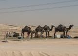 Riyadh residents