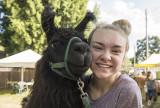 Zoe the llama and friend