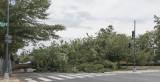 Tree down on Pennsylvania Avenue SE