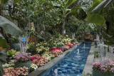 The conservatory in poinsettias