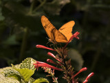 The Butterfly Pavilion (2)