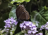 The Butterfly Pavilion (4)