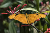 The Butterfly Pavilion (5)