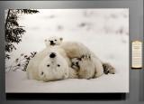 'Polar Bear and Cubs,' by Daisy Gilardini