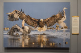 'Bald Eagle and Great Blue Herons,' by Bonnie Block