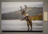 'Barren-Ground Caribou,' by Dee Ann Pederson