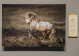'Wild Mustang,' by Verdon Tomajko