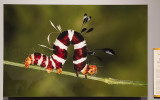 'Dice Moth Caterpillar,' by Heinrich Human