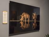 'White Rhinoceros,' by Charl Senekai