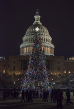 US Capitol Christmas Tree