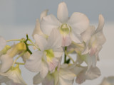 Delicately tinted