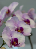 Repeating orchids